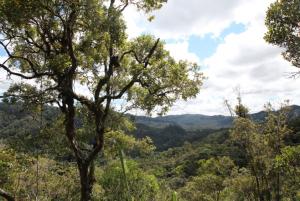 Las deszczowy na Madagaskarze